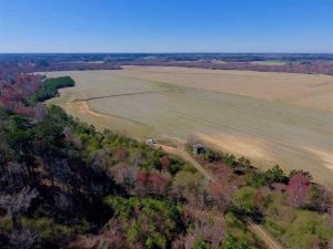 REDUCED!  81.75 Acres of Farm and Timber Land For Sale in Wilson County NC!