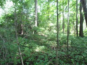 SOLD!!! 5 Acre Building Lot For Sale in Isle of Wight County VA!