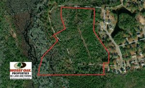 25 Acres of Hunting Land For Sale in Scotland County NC!