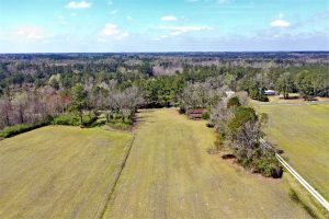 16 Acres of Farm and Timber Land For Sale in Columbus County NC!