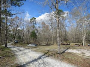 21 Acres of Residential and Hunting Land in Pender County NC!