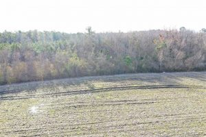UNDER CONTRACT!  42 Acres of Farm and Hunting Land for Sale in Columbus County NC!