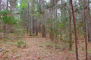 UNDER CONTRACT!!  12 Acres of Residential and Timber Land for Sale in Wake County NC!