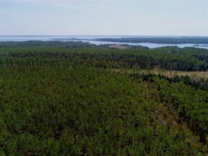 UNDER CONTRACT!!  26.94  Acres of Hunting Land for Sale in Pamlico County NC!