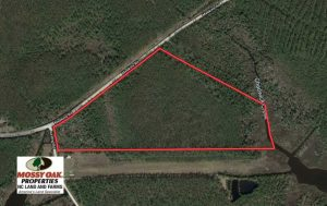 26.94  Acres of Hunting Land for Sale in Pamlico County NC!