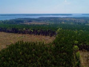 UNDER CONTRACT!!  22.89  Acres of Hunting Land For Sale in Pamlico County NC!