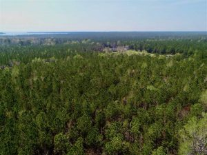 22.89  Acres of Hunting Land For Sale in Pamlico County NC!