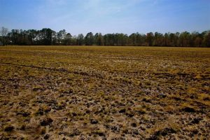 SOLD!!  8.38 Acres of Farm Land For Sale in Pamlico County NC!