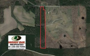SOLD!!  19.5 Acres of Hunting and Timber Land for Sale in Halifax County NC!