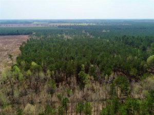 19.5 Acres of Hunting and Timber Land for Sale in Halifax County NC!