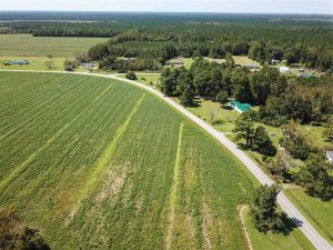 52 Acres of Farm and Hunting Land For Sale in Tyrrell County NC!