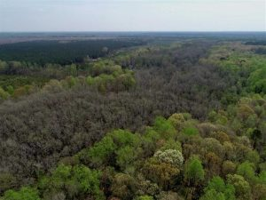 REDUCED! 49 Acres of Farm and Timber Land For Sale in Halifax County NC!