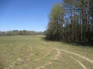 UNDER CONTRACT!!  437 Acres of Hunting and Waterfront Land For Sale in Southampton County VA!