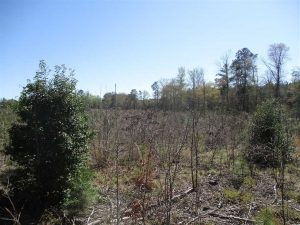 SOLD!!  437 Acres of Hunting and Waterfront Land For Sale in Southampton County VA!
