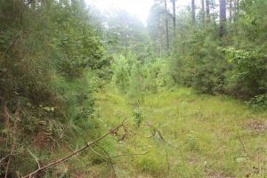 SOLD!!  6 Acres of Hunting and Residential Land For Sale in Surry County VA!