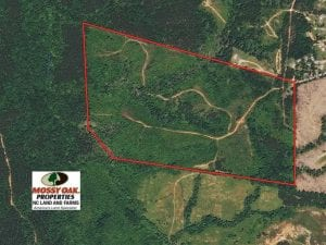 106.89 Acres of Hunting Land with House For Sale in Person County NC!