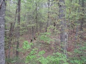 SOLD!!  42 Acres of Residential and Recreational Land for Sale in Alleghany County VA!