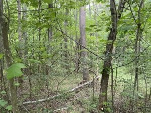 SOLD!!  10 Acres of Residential Land For Sale in Orange County NC!
