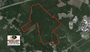 UNDER CONTRACT!!  257.92 Acres of Hunting and Timber Land For Sale in Brunswick County NC!