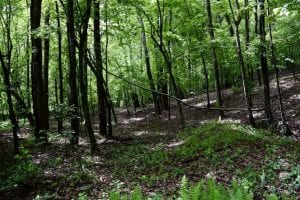 54 Acres of Hunting and Recreational Land For Sale in Franklin County VA!