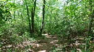 SOLD!!  21 Acres of Hunting and Timber Land for Sale in Patrick County VA!