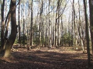UNDER CONTRACT!!  38 Acres of Timber and Hunting Land For Sale in Accomack County VA!