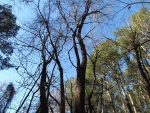 SOLD!!  38 Acres of Timber and Hunting Land For Sale in Accomack County VA!