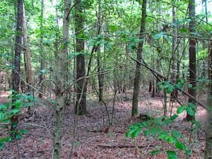 16 Acres of Hunting Land For Sale in Southampton County VA!