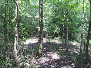SOLD!!  5 Acres of Hunting Land of Southampton County VA!