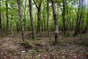 24 Acres of Hunting and Recreation Land For Sale in Pittsylvania County VA!