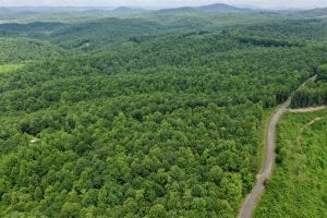 156 Acres of Hunting and Recreation Land for Sale in Franklin County VA!
