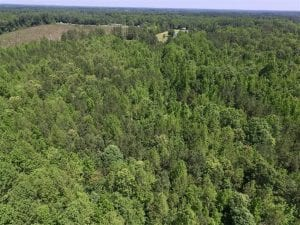 37.3 Ac of Hunting and Recreational Land For Sale in Lunenburg County VA!