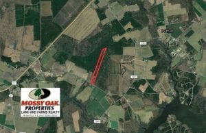 SOLD!!  21 Acres of Hunting and Timber Land For Sale in Perquimans County NC!