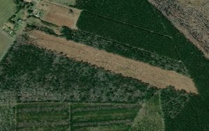 23 Acres Hunting and Timber Land For Sale in Perquimans County NC!