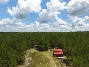 98.03 Acres of Hunting and Timber Land for Sale in Horry County SC!