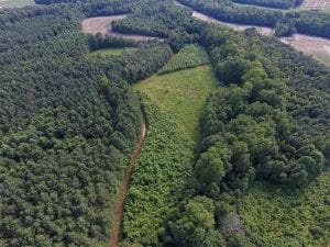 65.24 Acres of Timber and Hunting Land For Sale in Nash County NC!