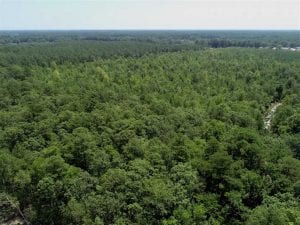 UNDER CONTRACT!!  12.59 Acre Wooded Residential Building Lot in Gates County NC!
