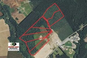 UNDER CONTRACT!!  11.66 Acre Wooded Residential Building Lot in Gates County NC!