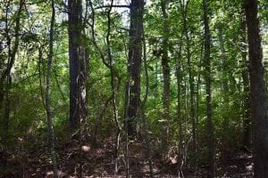 UNDER CONTRACT!!  52.43 Acres of Hunting Farm and Timberland For Sale in Camden County NC!
