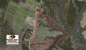 REDUCED!  52.43 Acres of Hunting Farm and Timberland For Sale in Camden County NC!
