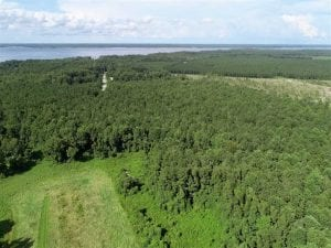 SOLD!!  33.41 Acres of Hunting and Timber Land For Sale in Beaufort County NC!