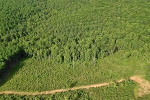 UNDER CONTRACT!!  52.96 Acres of Hunting Land For Sale in Franklin County VA!