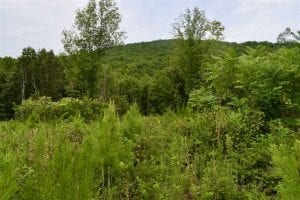 SOLD!!  52.96 Acres of Hunting Land For Sale in Franklin County VA!