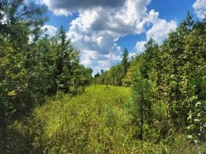 UNDER CONTRACT!!  61.12 Acres of Hunting Land for Sale in Greensville County VA!