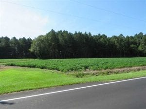 UNDER CONTRACT!  10 Acres of Farm and Timber Land For Sale in Robeson County NC!