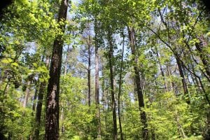5 Acres of Residential Land For Sale in Dinwiddie County VA!