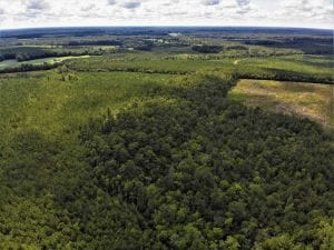 10 acres of Timber and Residential Land for Sale in Suffolk County VA!