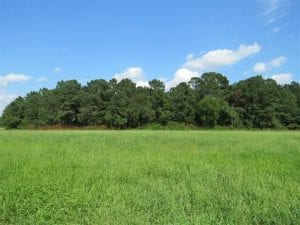 18 Acres of  Timber and Hunting Land For Sale in Columbus County NC!