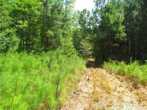 SOLD!!  36.5 Acres of Hunting Land for Sale in Accomack County Virginia!