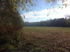 36 Acres of Hunting Land for Sale in Halifax County VA!